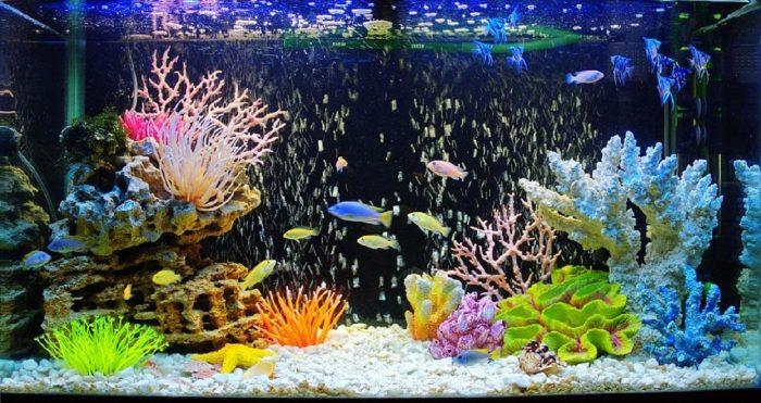 Всё для дизайна аквариума